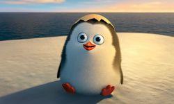 梦工场3D动画《马达加斯加的企鹅》中国11月14日上映