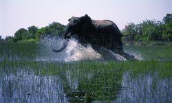 法国3D纪录电影《狂野非洲》今日中国内地上映
