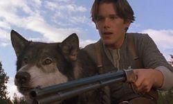 第六次改编上大荧幕!迪士尼也将翻拍《雪地黄金犬》!