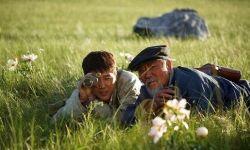 从春节档票房趋势看高口碑电影《狼图腾》:必将亏本!