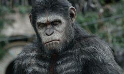 网曝《猩球崛起》第三部将定名为《猩球之战》