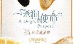 电影《一条狗的使命》定档3月3日  汪星人七十二变萌化人心