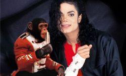 """迈克尔·杰克逊的黑猩猩宠物""""泡泡""""将成定格动画主角"""