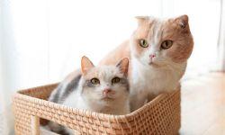 """电影《猫咪后院》将在日本的""""猫咪日""""2月22日上映"""