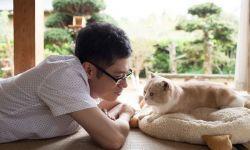 电影《猫咪后院之家》将于4月8日在日本上映