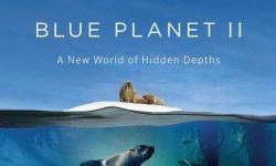 BBC口碑续作《蓝色星球2》首爆预告 高清海洋奇景震撼眼球