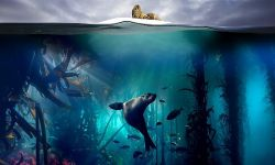BBC纪录片《蓝色星球2》10月30日开播