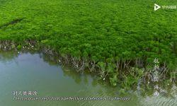 海南、黑龙江究竟还有多少你不知道的惊人之美?《航拍中国》告诉你!