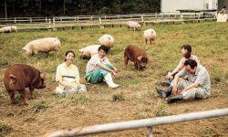 《生存家族》:停电的日子,我们一家蹲马路牙子上吃猫粮