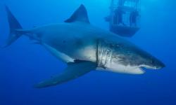 北美票房最高的独立电影《鲨海》,在中国扑街!
