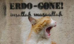 土耳其高分纪录片《爱猫之城》有望引进  曝贺年海报