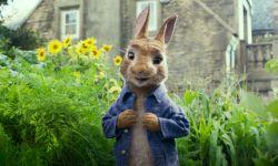 电影《彼得兔》插曲有哪些?《彼得兔》背景音乐汇总