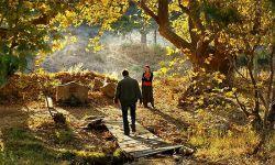 《野梨树》:青春的困境 无解的乡愁