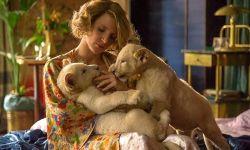 影视行业对女性故事的青睐能持续多久?