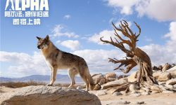 """电影《阿尔法:狼伴归途》发布""""亲密伙伴""""版预告"""