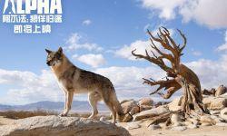 电影《阿尔法:狼伴归途》曝海报预告确认引进 人狼传奇就此上演