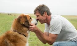 《一条狗的使命》续集电影中国造?