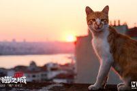 《爱猫之城》终极预告片 萌力值爆表