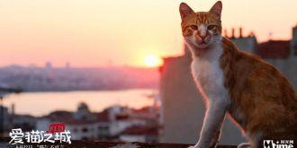 《愛貓之城》終極預告片 萌力值爆表