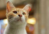 电影《爱猫之城》发布推广曲《猫语》MV