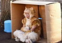 《虎先生》曝光海报预告 中年漫画家借猫还魂