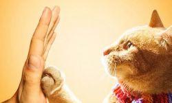 《流浪猫鲍勃》举行昆明看片会 一人一猫击掌为誓感人