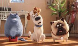 《爱宠大机密2》预告出炉,逗趣宠物又来了!萌翻啦