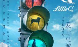 电影《小Q》首曝概念海报 极致治愈再现导盲犬爱与忠诚
