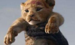 真人版《狮子王》没有人?网友:原来是Discovery