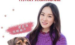 霍思燕献声 《一条狗的回家路》 首次挑战动物配音