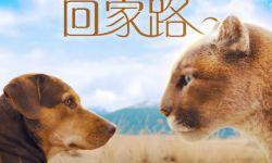 """《一条狗的回家路》曝""""猫狗""""海报"""