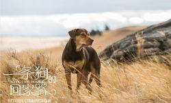 """《一条狗的回家路》曝""""口碑特辑"""" 贝拉为爱回家"""