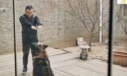 宁浩澄清《疯狂的外星人》虐狗谣言:虐待并不存在