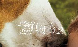 治愈佳作《一条狗的使命2》曝预告,定档5.17同步北美上映