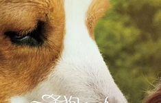 电影《一条狗的使命2》曝推广曲MV 当你孤单,你会想起谁
