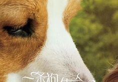大发红黑大战《一条狗的使命2》曝推广曲MV 当你孤单,你会想起谁