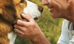 电影《一条狗的使命2》超前鉴赏 小狗贝利守护人类