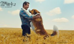 电影《一条狗的使命2》曝终极预告 每秒都是泪点