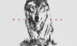 电影《白牙》发水墨海报 混血幼狼残酷成长守护家园