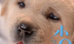 电影《小Q》海报萌力升级融化偏见 人狗相守一生动人催泪