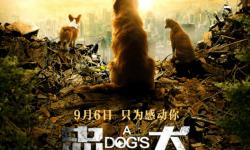 电影《忠犬流浪记》发布定档预告 9月6日温情上映感动你