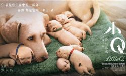 电影《小Q》改档至9月20日登陆全国院线
