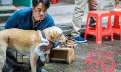 冲破观众泪点防线,《小Q》刷新国产宠物片票房纪录