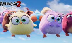 爆笑动画电影《愤怒的小鸟2》上线热度不减  网络播放量居高不下