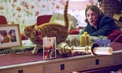 吸猫大片《鲍勃的礼物》即将开拍  预计明年年底上映