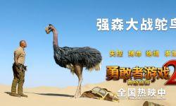 勇敢者沙漠大战巨型鸵鸟,《勇敢者游戏2》 首日票房遥遥领先