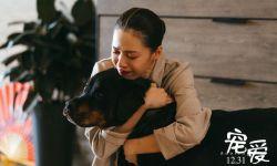 《宠爱》将于1月19日在日本池袋HUMAX上映