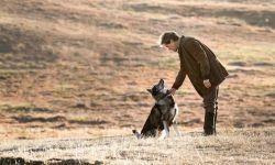 《多哥》:这条百年前的二哈领头犬,成为跋涉千里救命的英雄