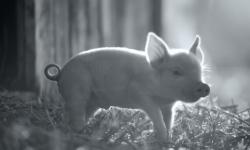 动物纪录片《贡达》曝预告,2月23日柏林电影节首映