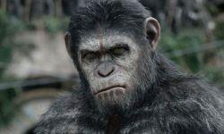 电影《人猿星球》:凯撒的故事将会继续